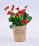 Begonia y flor salvaje en el crisol de papel con la escritura de la etiqueta