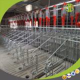 판매를 위한 돼지 임신 기간 축사가 돼지 장비 최신 복각에 의하여 직류 전기를 통했다