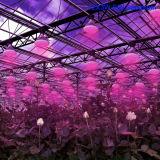 O melhor diodo emissor de luz Rated cresce o crescimento de planta do bulbo do diodo emissor de luz das luzes E27 12X3w