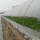 Самый дешевый засаживая парник для аграрной пользы