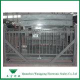 Scs-1t elektronischer Tierviehbestand-wiegende Schuppen
