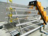 3-5 gabbia galvanizzata tuffata calda del pollo di strati con il prezzo di fabbrica