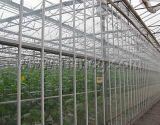 [مولتيسبن] دفيئة زراعيّة زجاجيّة ([إكسس-غل9600/12000فنلو])