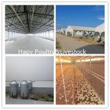 Azienda avicola prefabbricata progettata moderna della struttura d'acciaio