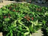 녹색 벽 구 Wall05182735의 고품질 인공적인 플랜트 그리고 꽃
