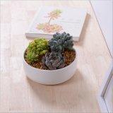 Mini crisoles de flor de cerámica blancos decorativos redondos