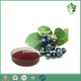 Polyphenol direto 10%-30% do extrato do Chokeberry do preto da fonte da fábrica; ~ 25% da antocianida 1%