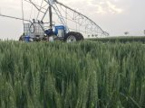 Автоматическая оросительная система потека фермы