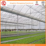 차양 시스템을%s 가진 꽃 또는 과일 또는 야채 성장하고 있는 플레스틱 필름 온실