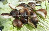 خيزرانيّ يخوزق عصي وسفافيد لأنّ لحمة
