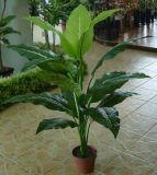 Alta qualità di Dieffenbachia artificiale delle piante con 24lvs Gu911093912