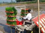 Trapiantatrice del riso di riga di alta velocità 6 (2GZ-6DK)
