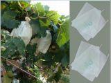 Wasser-beständiger biodegradierbarer Packpapier-Frucht-Schutz, der Deckel-Beutel vor Vögeln einwickelt