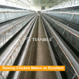 Tianrui H 유형 자동적인 보일러 가금 농장 감금소 디자인