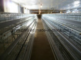 Gaiolas das aves domésticas dos pássaros automáticos da galinha da franga para o uso da exploração agrícola