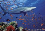 Capsules de Softgel de squalène de fonction de protection de foie avec le prix concurrentiel