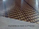 A película do núcleo de /Poplar do vidoeiro enfrentou a madeira compensada para o mercado de Europa