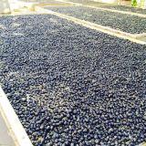 Medlar perda de gordura Lycium Chinense Fruta seca preta