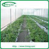 Invernadero plástico del túnel para las semillas del tomate