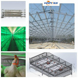 Steel prefabbricato Poultry House Design e Construction