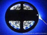 Striscia flessibile chiara calda di vendita 60LEDs IP68 LED