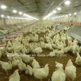 Ferme avicole automatique pour le sélectionneur