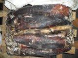 يجمّد بيرو الحبّار ([2-4كغ])