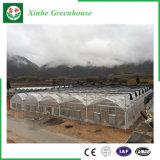 Serra di plastica della Cina per le verdure/frutta/fiori