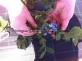 Tipo plástico paño de la Anti-Hierba y estera tejida de Modling del gráfico de Weed del control