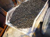 Maquinaria do carvão vegetal do carvão amassado da serragem da folhosa