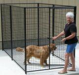 Gabbia della rete fissa di esecuzione del cane, polvere e galvanizzato rivestito