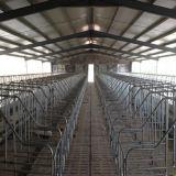 Собственн-Locked клети беременность для хавроньи поднимая ферму