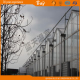 Longue Vie-Span Venlo Type Glass Greenhouse pour Planting Vegetalbes&Fruits