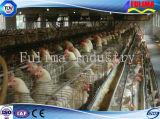 Vorfabriziertes Gebäude-Geflügel-Huhn-Haus für Bauernhof (FLM-F-013)