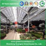 중국 농업 다중 경간 플라스틱 온실