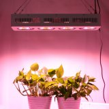 90 Degree Reflector Cup Us / Ca Stock Full Spectrum LED Grow Lights 400W COB com 100% de garantia de qualidade para todas as fases das plantas