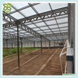 Do tomate hidropónico dos sistemas de Venlo casa verde