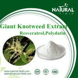 Natürlicher Pflanzenauszug riesiges Knotweed 98% Polydatin Puder