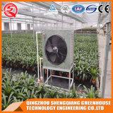 Multi Überspannung galvanisiertes Stahlrahmen PC Blatt-grünes Haus für Gemüse