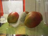 Освободите яблока сбывания конструкции горячие упаковывая сеть пены