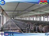 Chambre de porc préfabriquée de structure métallique de construction pour le bétail (FLM-F-016)