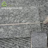 Mattonelle di pavimento bianche del granito dello spruzzo grigio di superficie Polished di colore G418 di alta qualità