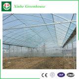 Serre commerciali usate galvanizzate del coperchio di vetro della struttura d'acciaio per agricoltura