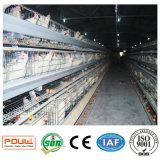 un tipo migliore pollo di strato dell'uovo dell'azienda avicola di prezzi mette in gabbia il sistema