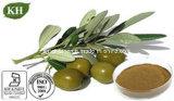 Estratto verde oliva organico naturale del foglio; Oleuropein solubile in acqua 20%-80% da HPLC; Hydroxytyrosol 20%-50%