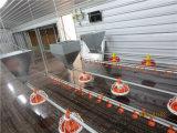 Casa de grelha do controle ambiental com equipamento automático das aves domésticas do jogo cheio
