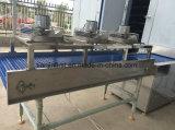Seashell Fish camarón helado de máquina de congelación rápida