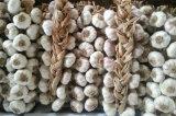 Involucri dell'aglio