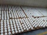 Hight Helderheid het Aansteken van de 2100 LEIDENE van het Lumen A75 18W Bollen van de Bol