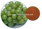 Organische Polyphenole des Trauben-Startwert- für Zufallsgeneratorauszug-95% Proanthocyanidins 95%